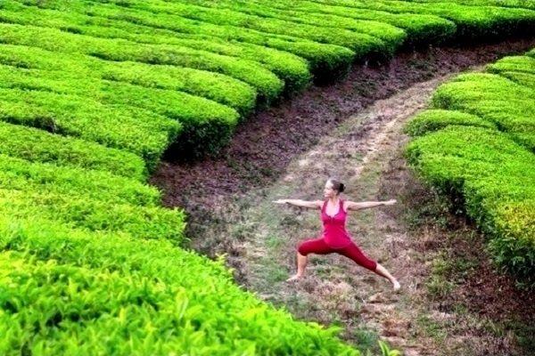 Зеленый чай против ожирения