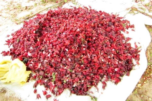 Сушка лепестков суданской розы