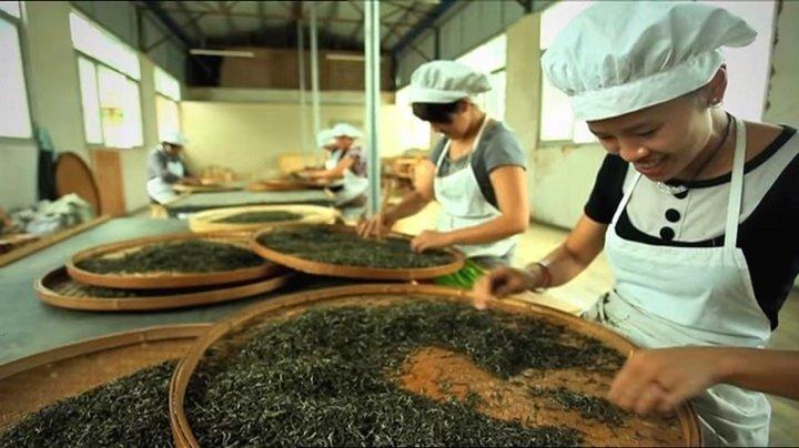 Сортировка и сушка чая