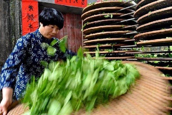 Сушка чайного листа для сорта Бай Мао Хоу